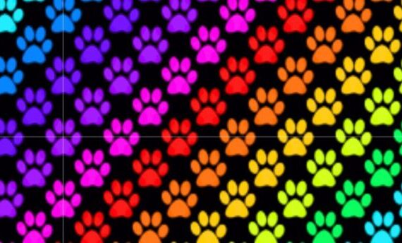 wzór rainbow paws